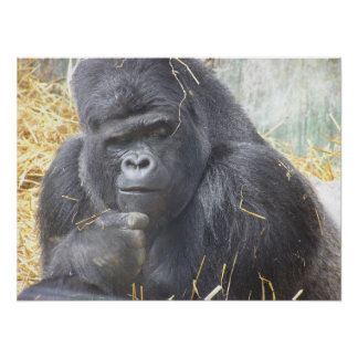 Thoughtful Gorilla Poster