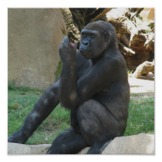 Thoughtful Gorilla Posters