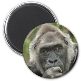 Thoughtful Gorilla Refrigerator Magnets