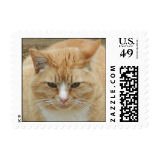 Thoughtful Kitty Postage