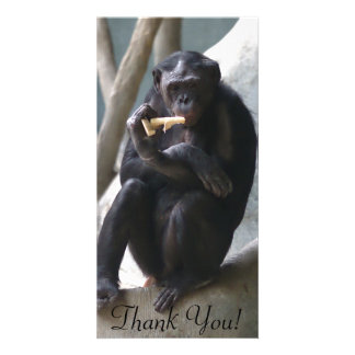 Thoughtful Looking Bonobo Eats A Snack Card