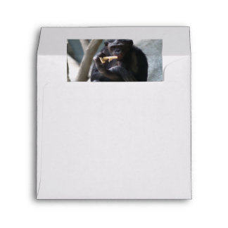 Thoughtful Looking Bonobo Eats A Snack Envelope