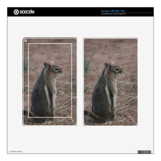 Thoughtful Squirrel Decal For Kindle Fire