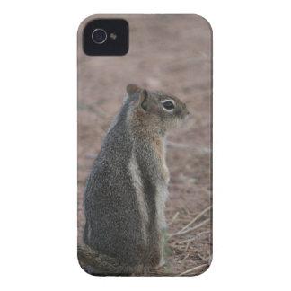 Thoughtful Squirrel iPhone 4 Case-Mate Case