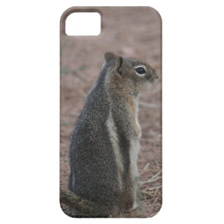 Thoughtful Squirrel iPhone SE/5/5s Case
