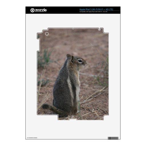 Thoughtful Squirrel Skin For iPad 3