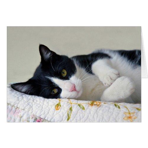 Thoughtful Tuxedo Cat