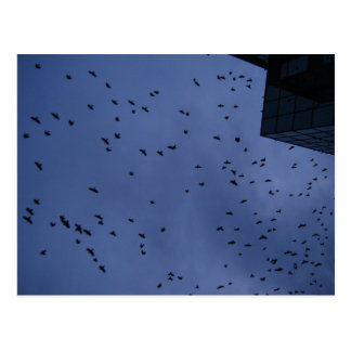Thousands of Crows--F0750 Postcard