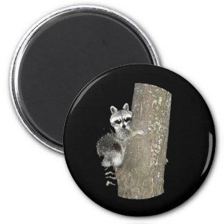 Thre Original Tree Hugger Raccoon Magnet