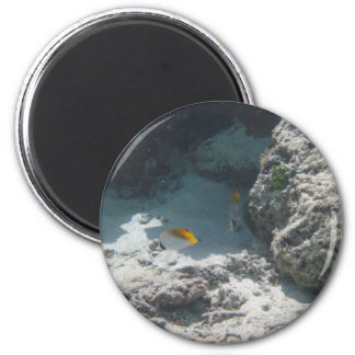Thread Fin Butterfly Fish 2 Inch Round Magnet