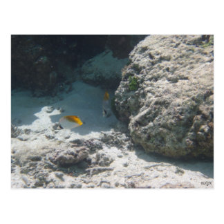 Thread Fin Butterfly Fish Postcard