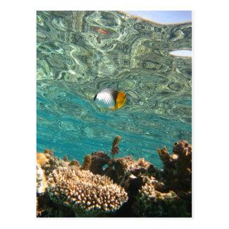 Threadfin Butterflyfish Postcard