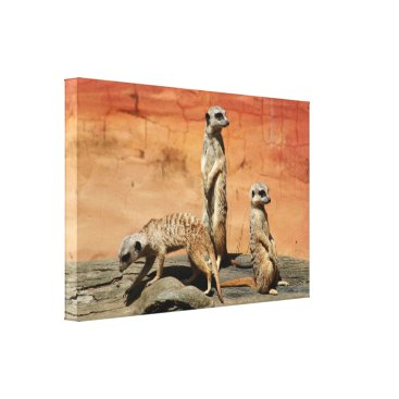 franwestphotography Three African meerkats at the zoo Canvas Print