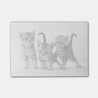 Three American Shorthair Playing Post-it® Notes