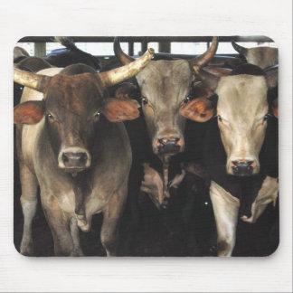 Three Amigos Bulls cow rodeo western Mousepad