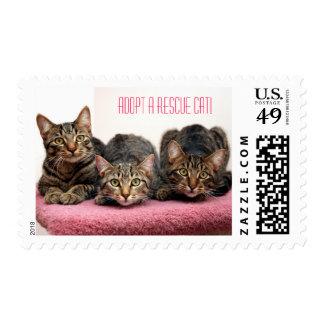 Three Amigo's Stamp