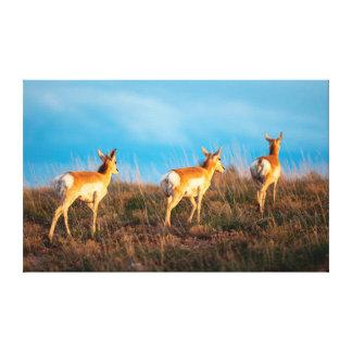 Three antelope walking away at sunset canvas print