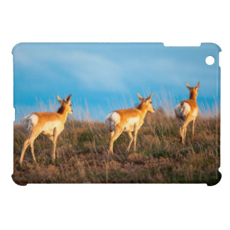 Three antelope walking away at sunset cover for the iPad mini