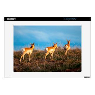 Three antelope walking away at sunset laptop skins