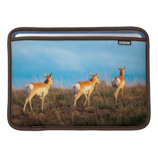 Three antelope walking away at sunset MacBook air sleeve