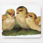 three baby chicks mousepads