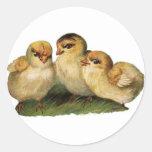 three baby chicks sticker