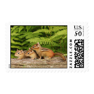Three Baby Chipmunk Siblings Postage