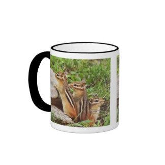 Three Baby Chipmunks Mug