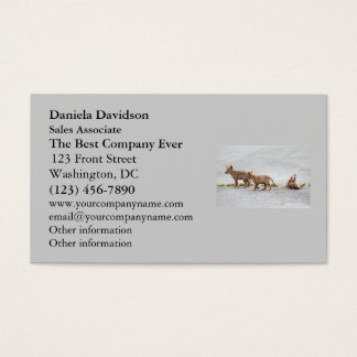 Three Baby Coyotes Playing Business Card