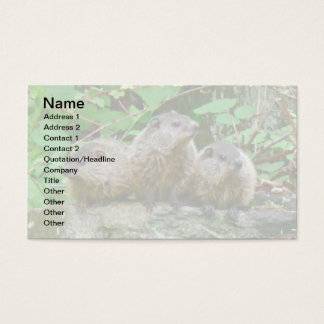 Three Baby Groundhogs Business Card