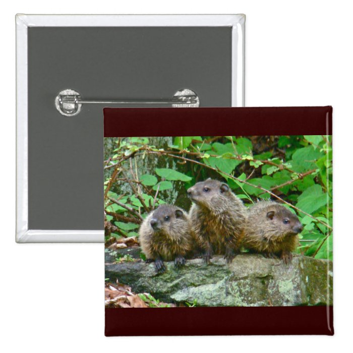 Three Baby Groundhogs Button