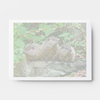 Three Baby Groundhogs Envelopes