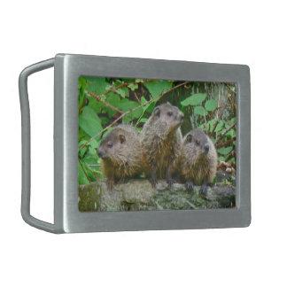 Three Baby Groundhogs Rectangular Belt Buckle