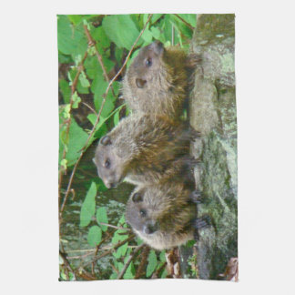 Three Baby Groundhogs Towels