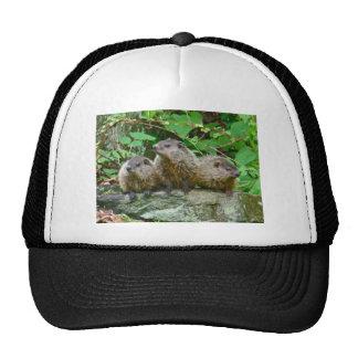 Three Baby Groundhogs Trucker Hat