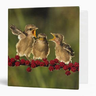 Three Baby Lanius Schach Birds Binder