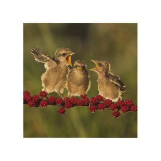 Three Baby Lanius Schach Birds Wood Wall Decor