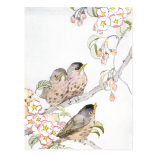 Three Baby Robins in a Cherry Tree Postcard