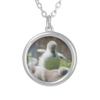 Three Baby Swan Cygnet ducklings cuddling together Silver Plated Necklace
