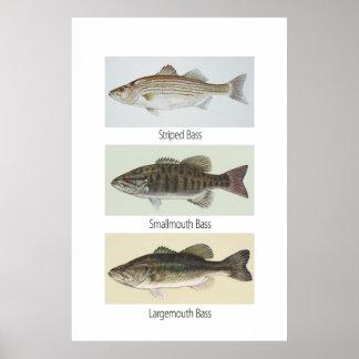 Three Bass Poster
