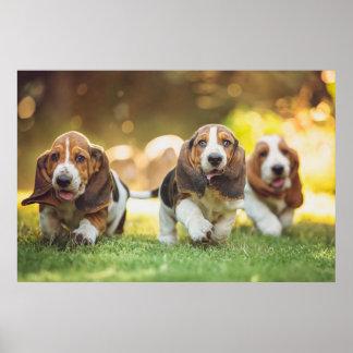 Three Basset Hound Puppies Joyfully Running Poster