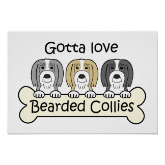 Three Bearded Collies Poster