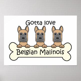 Three Belgian Malinois Poster