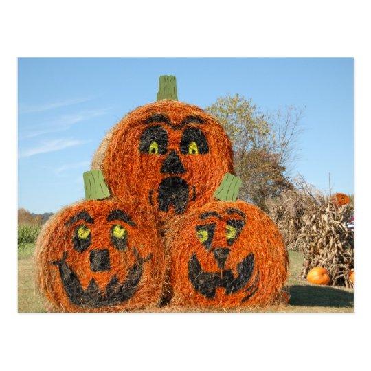 Three Big Pumpkins Postcard