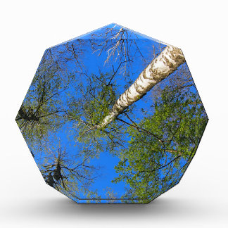 Three birch trees on the background of the sky acrylic award