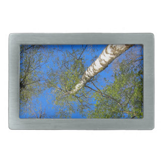 Three birch trees on the background of the sky belt buckle