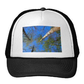 Three birch trees on the background of the sky trucker hat