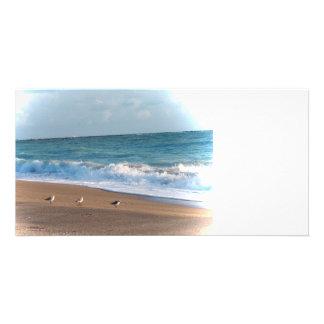 three birds on shore photo florida beach photo cards