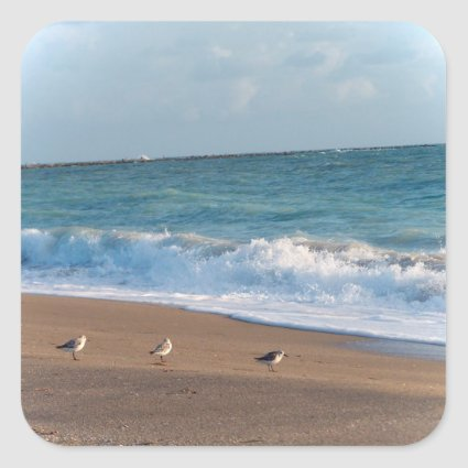 three birds on shore photo florida beach square sticker