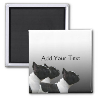 Three Black and White French Bulldogs 2 Inch Square Magnet